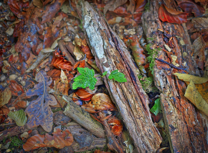 Amount Autumn Autumn Colors Autumn Leaves Bark Beauty In Nature Close-up Day Focus On Foreground Green Color Ground Leaves Leaves🌿 Moss Nature Outdoor Outdoor Photography Outdoors Plant Season  Tree Trees Wood Wood - Material WoodLand