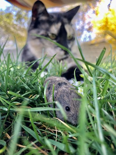 Squirrel in a field