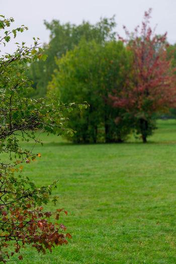 Autumn Park Still Green Fall Green Outdoors City Walk
