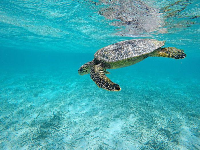 Turtle swimming in sea
