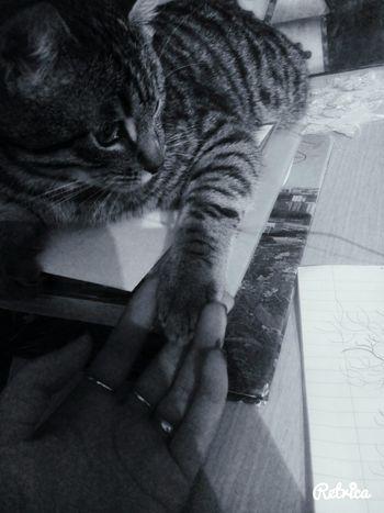 EyeEm Bestsellers Like Followme Dream Cat Lovers Cat мир всем народ Good Times Lovely