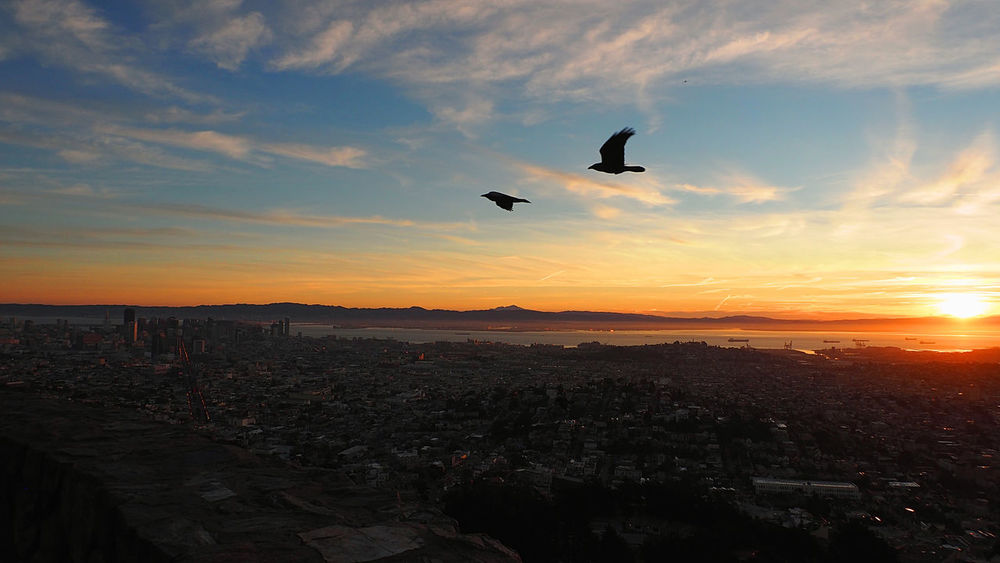 Sun rises, city starts! Shot from the highest point in SF: Twin Peaks! Aereal View Birds Flying Sanfrancisco Skyporn Sun Sunrise Twinpeaks