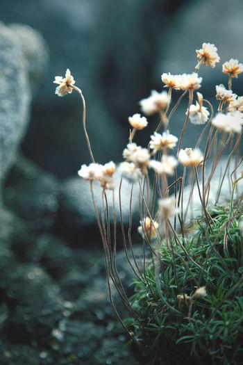 Fragile flowers on the sea rocks