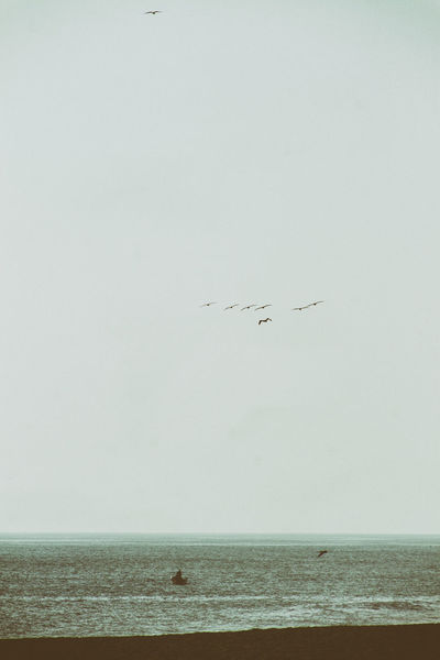 A flock of seagulls flies over a fisherman's boat on Nexpa beach. Nexpa Animal Themes Beach Beauty In Nature Bird Day Flying Horizon Over Water Nature No People Outdoors Scenics Sea Sky Water