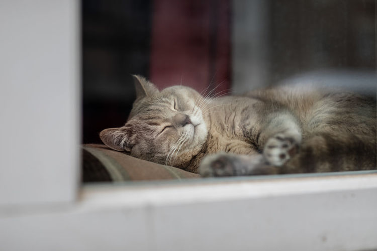 Cat sleeping on window