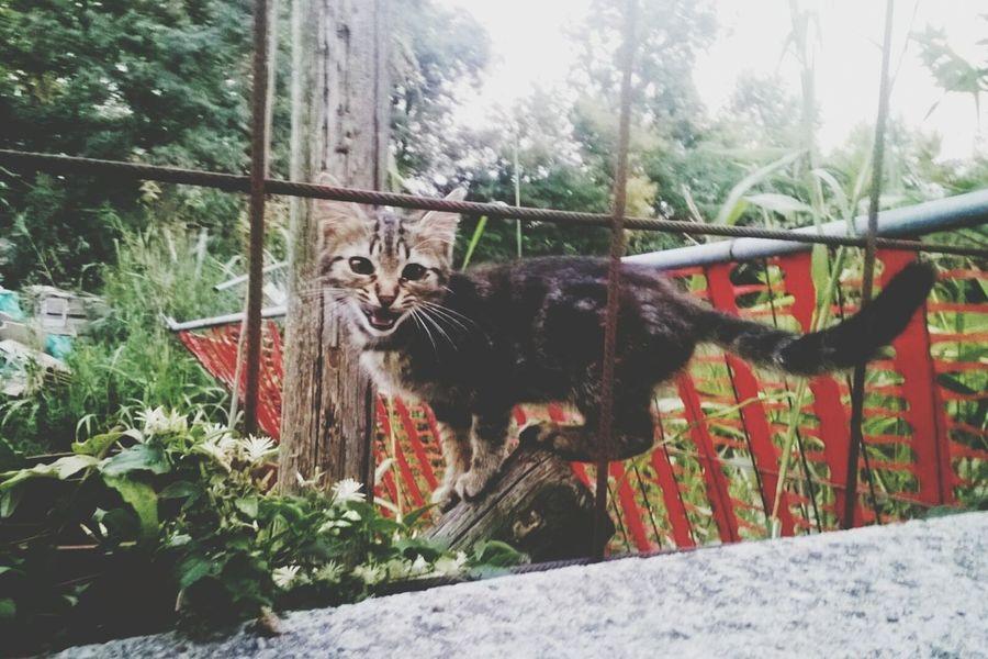 Taking Photos Miciomiao Kitty Kitty Cat Cats 🐱 Hello World