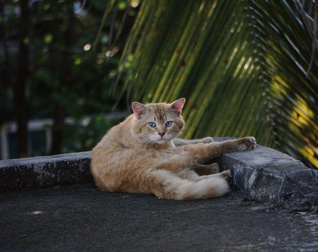 """El güero"" Mammal Animal Themes Animal One Animal Cat Domestic Domestic Animals Feline Domestic Cat Looking At Camera Pets"