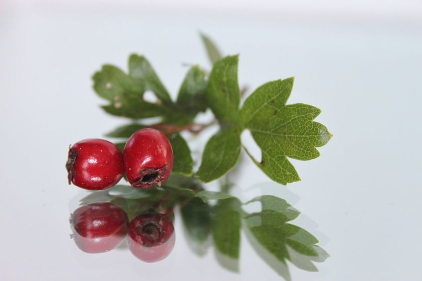 Berries Red Freshness Close-up Healthy Eating Studio Shot Food Food And Drink Fruit Leaf No People White Background Ready-to-eat Indoors  Nature Day Hawthorn