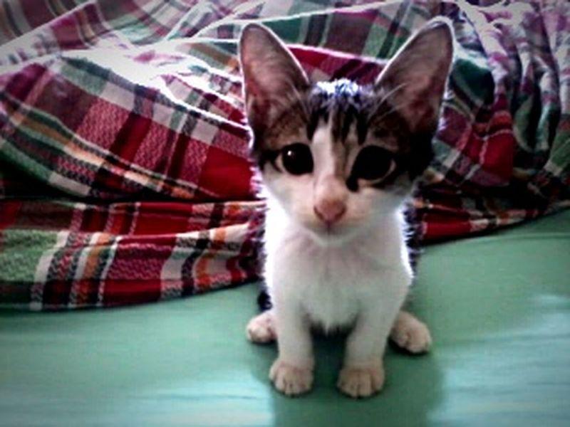 capture paling aku sayang... Rindu Pets Kucingcomel Eyeem Best Shots - Animals