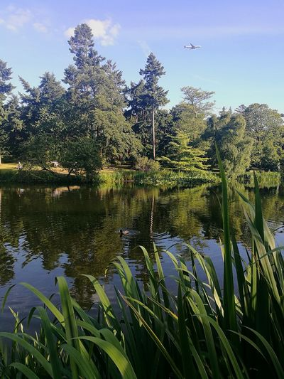Nature Water Growth Plant Lake Tree Outdoors Beauty In Nature Day Tranquility Scenics Reflection Freshness Sky Sunny Day Sunny Afternoon Trees Botanical Gardens Kew Gardens, London Tree Reflection  Reflection In The Water Reflections P9 Huawei