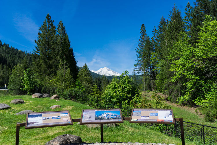 Interstate 5 wayside for Mount Shasta Beauty In Nature Blue Blue Sky California Day Forest Green Color Mountain Mountain View Mountains Mt Shasta Nature No People Outdoors Sky Tree Wayside