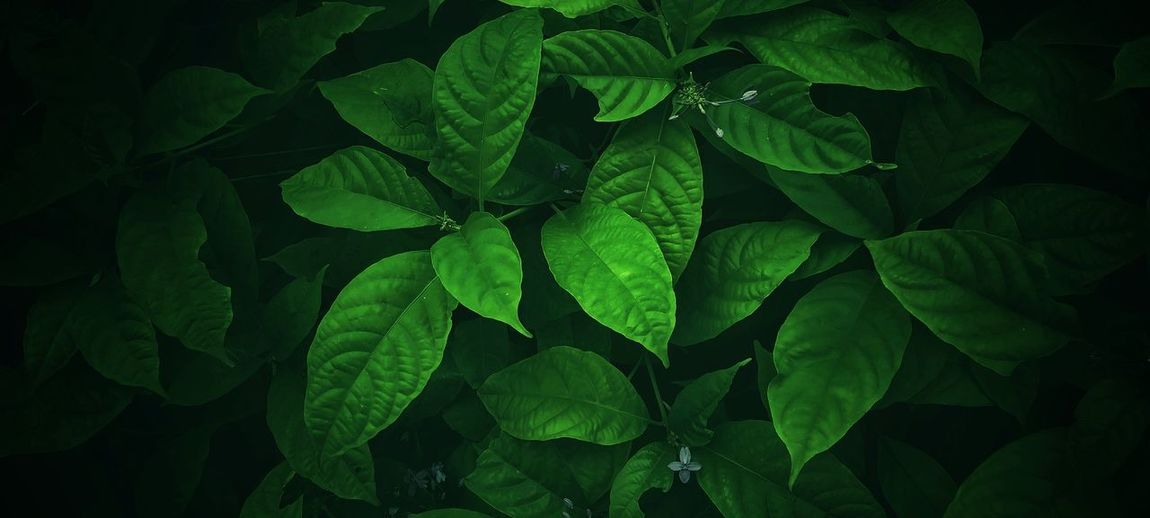 The green leaf background has a beautiful pattern.
