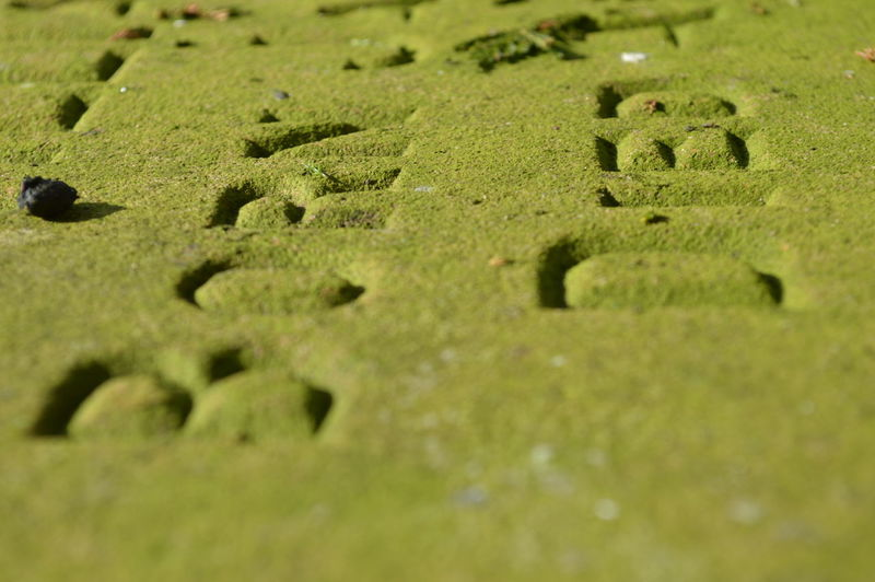 Beauty In Nature Born And Died Carved Lettering Carved Stone Close-up Focus On Foreground Grass Gravestone Green Color Life And Death Selective Focus Sunlight Surface Level Textured  Tomb Tombstone, Tranquility Birth And Death