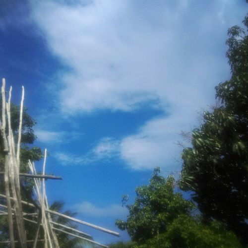 ☁☁ Sky Skycollection Countrysky Blue Sky Overtrees Trees