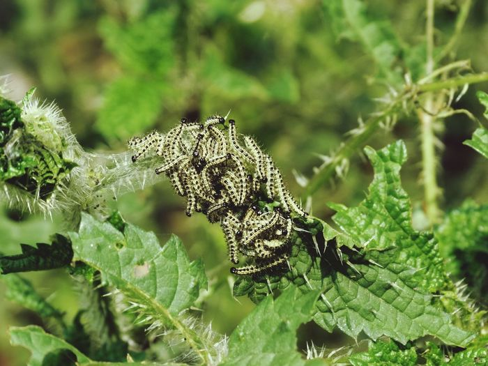 Close-Up Of Caterpillars On Green Plants