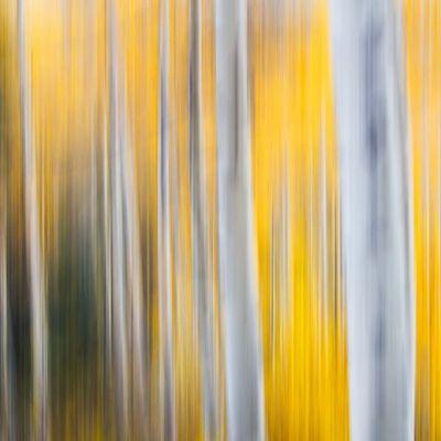 Motion blur Aspens Utahgram Utah Mountains LittleCottonWood