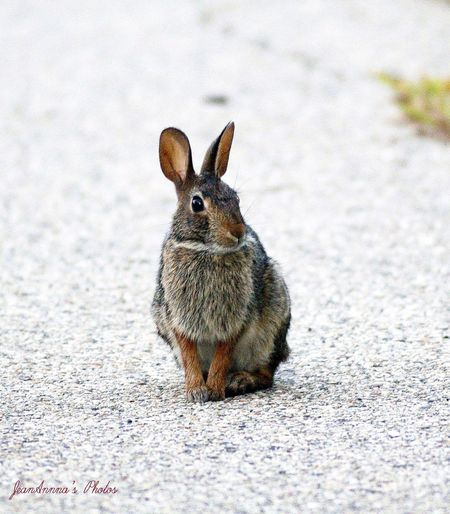 Animal Themes One Animal No People Mammal Animals In The Wild Nature Outdoors Animal Wildlife Day Close-up Rabbit 🐇 Cute Wildlife & Nature Wildlife Photography Photography