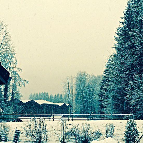Snow ❄ Chalet