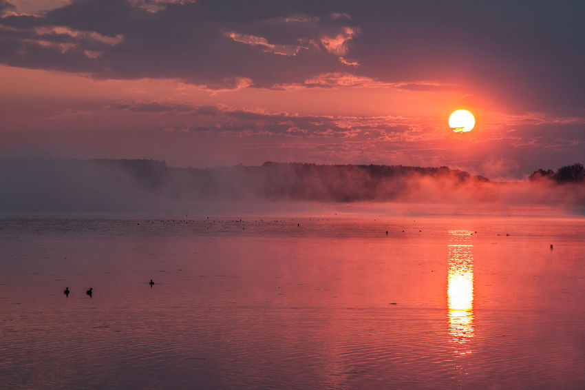 Animal Themes Beauty In Nature Bird Cloud - Sky Day Fog Foggy Foggy Morning Horizon Over Water Idyllic Nature No People Outdoors Reflection Scenics Sky Sun Sunset Tranquil Scene Tranquility Travel Destinations Water Waterfront