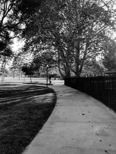 A small park in Santa Clarita, CA; (b&w) Blackandwhite IPhoneography Santa Clarita Park Tree Plant Nature Day No People Road Direction The Way Forward Outdoors Growth Footpath Sunlight Tranquility Shadow