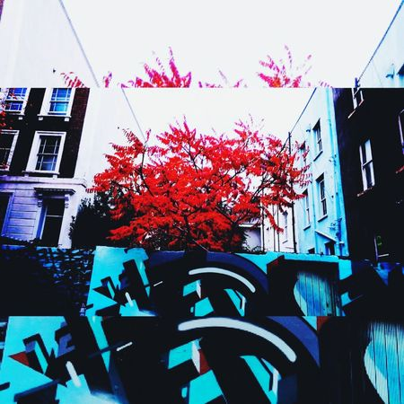 Adapted To The City Urban Nature Vibrant Trees City Street Art/Graffiti Outdoors No People City Dwellers Nature And Architecture In Harmony Winter Trees Blue View Inner City Lifestyle Urban Life Artistic Photography Mobilephotography Conceptual Photography Nature Photography Eye4photography Arte En Foco Colombia Musical Academia Creativity Composition Global Photographer Works Exhibition No Filter, No Edit, Just Photography ArtWork Texturas Y Col Winter Afternoon Cityphotography Urban Views Urban Photography Mobile Photography Nature And City Day Vivid Colous Bristol, England EyeEm New Here
