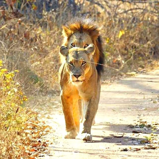 Animal Themes Nature Animal Hair Domestic Animals