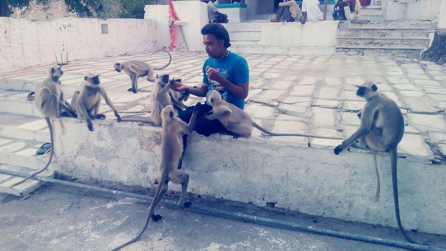 Men,monkey,animallover,eat,food,