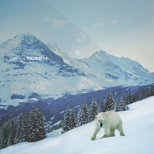 Cool as a Polar Bear // Collaboration with Nicole Hunziker from Switzerland, her beautiful photo from Bernese Alps and my edit. DroidEdit Lumiforms AMPTeam.org