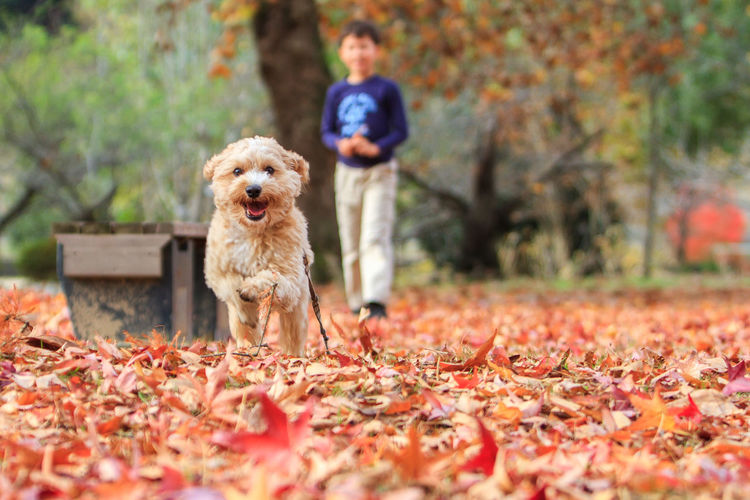 Come to papa! Animal Animal Love Animal Themes Animals Autumn Autumn Autumn Colors Day Dog Dogs Domestic Animals Fun Looking At Camera Mammal My Dog Nature One Animal One Person Outdoors People Pet Pet Photography  Pets Portrait Puppy