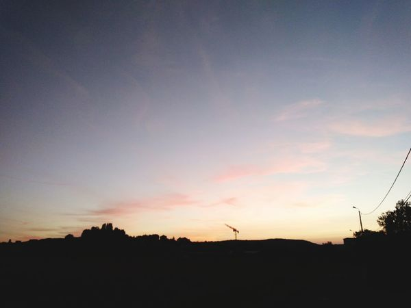 Tree Bird Sunset Flying Silhouette Sky