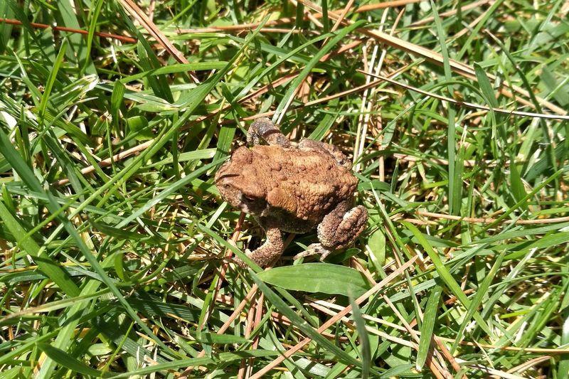 Nature Outdoors Animal Themes Rana Nature Naturaleza Natural Photography Frog Toad Sapo Summer Verano