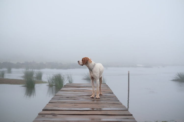 Meet Bracken, the fearless protector and watch dog for a little trout fishing village in Nyanga. Boardwalk Cold Dog Domestic Animals Jetty Lake Mist Nature Nature One Animal Outdoors Pets Pier Pier Pointer Sky Tranquil Scene Tranquility Water