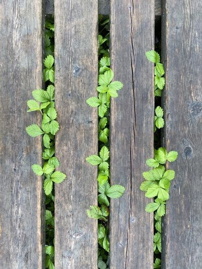 Close-up of plants growing by wooden fence