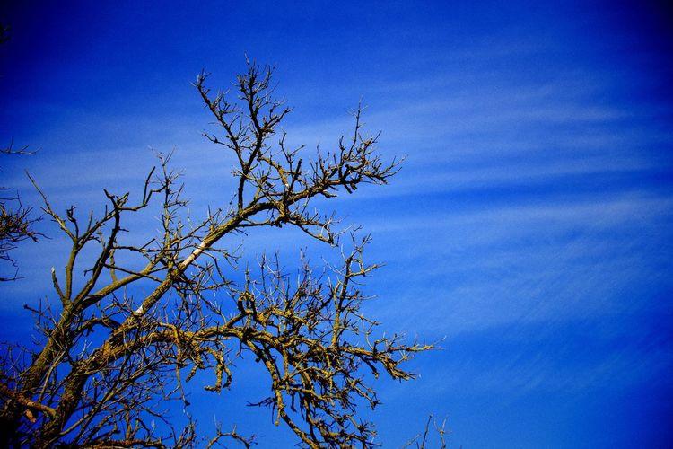 a dath tree in