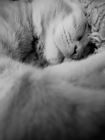 Animal Themes One Animal Mammal Relaxation No People Domestic Animals Lying Down Pets Close-up Feline Day Nature Outdoors Not Sharp But Cute :)  Paaaaarty Kitten 🐱 Neu Wulmstorf Tabby Cat Meow🐱 DukeTheTomcat Indoors  Monochrome Photography