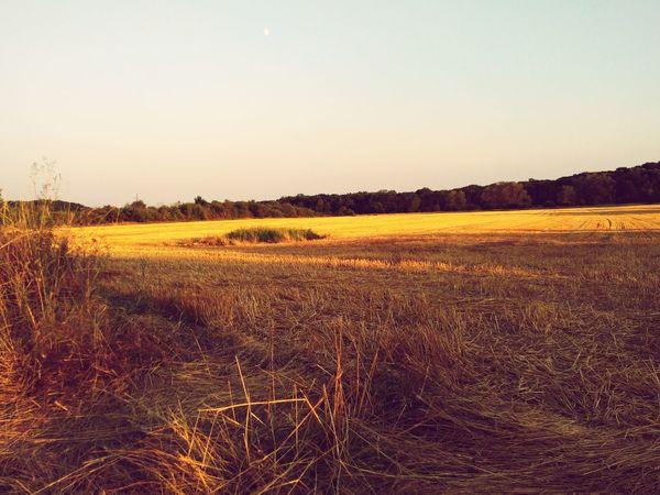 Rural Scene Sunset Cereal Plant Agriculture Field Crop  Sky Landscape