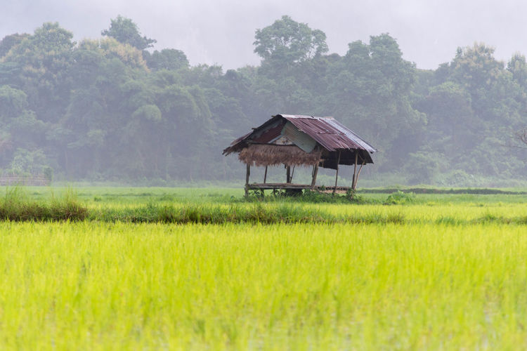 Shed On Rice Field During Foggy Weather