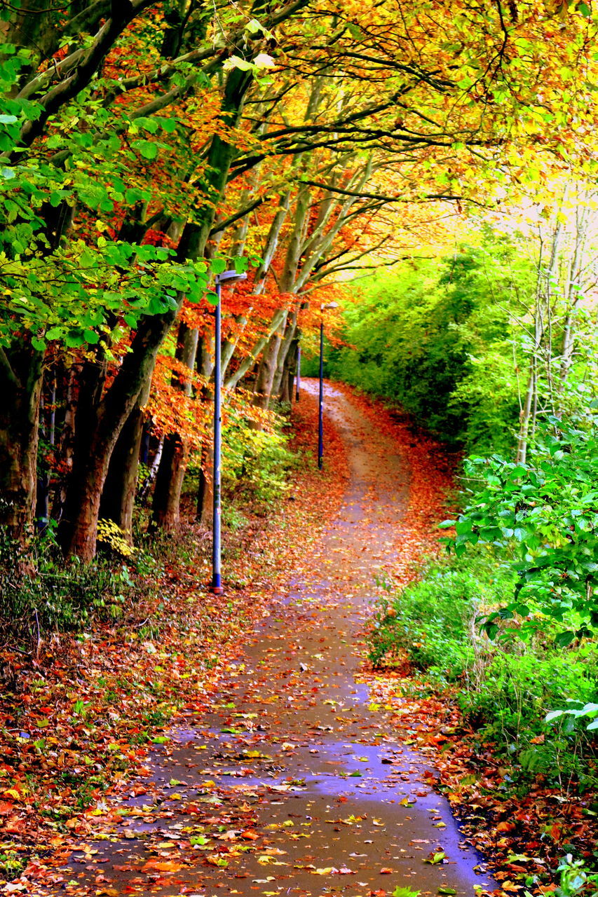 autumn, leaf, tree, nature, change, tranquil scene, tranquility, beauty in nature, scenics, the way forward, forest, no people, outdoors, growth, day, landscape, road, curve, single lane road, branch, grass
