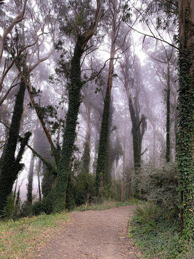 Foggy Day Tree