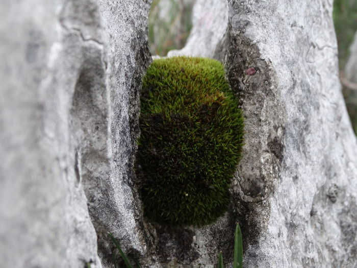 Beauty In Nature Close-up Day Growth Moss Nature No People Outdoors Rock Textured  Tree
