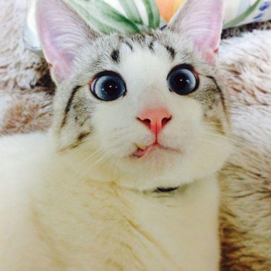 Color Portrait Neko Manekineko Cat♡ Animals Cats Cat Gatti Gatto