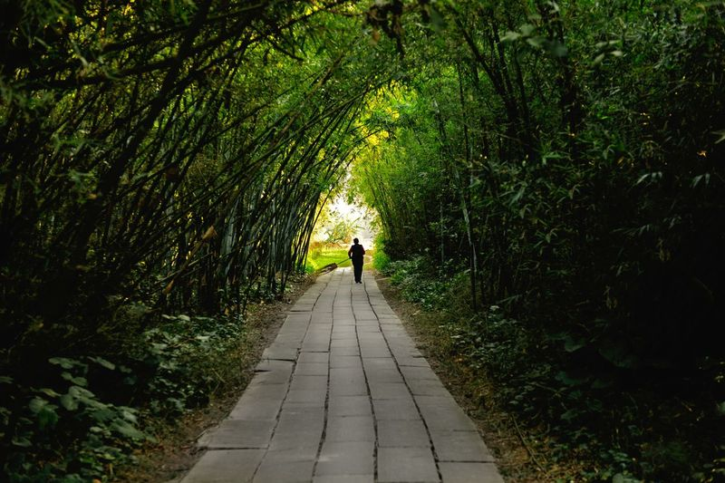Mid distance view of man walking on footpath at park