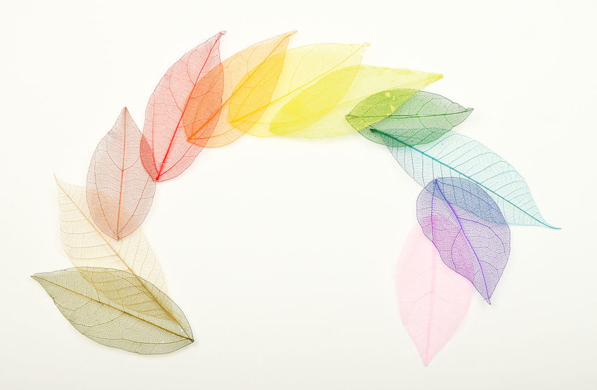 Rainbow of colorful painted skeleton leaves Color Colorful Craft Dried Everything In Its Place Fragile Fragility Handcraft Handmade Leaves Mix Painted Palette Rainbow Range Scrapbooking Skeleton Variety Your Design Story Pivotal Ideas Colour Of Life