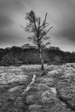 Grass Tree Blackandwhite Photography Countryside monochrome photography No People Not Quite Spring Wetlands