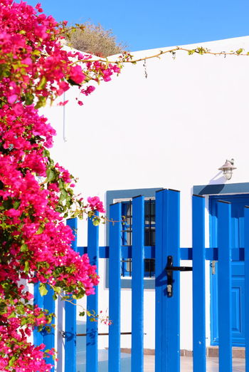 Pink flowering plants by building against clear blue sky