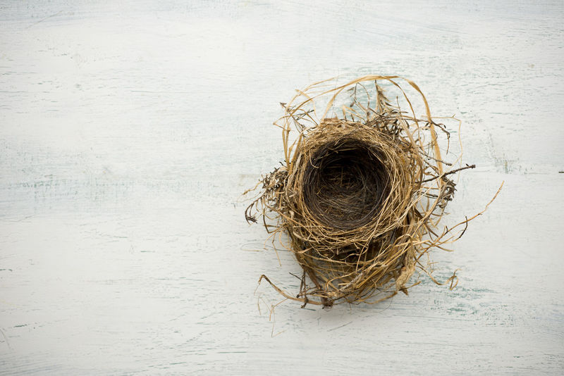 Bird nest Background Bird Nest Built Structure Conceptual Dried Plant Dry Empty Habitat Horizon Over Water Indoors  Indoorsphotography Leaves Nature Nest Rough Surface Level Texture Twigs Vacant White Washed Wood Woven Together