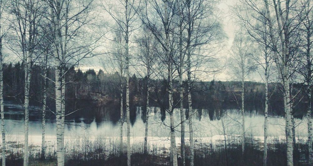 ... a Random picture from a random Train Journey ... Train Journeys ... Tree Reflection Reflections Water Lake Sweden Sweden Nature Birch Tree Birch Trees Birches Bare Branches Bare Braches Mood Moody березы Pattern