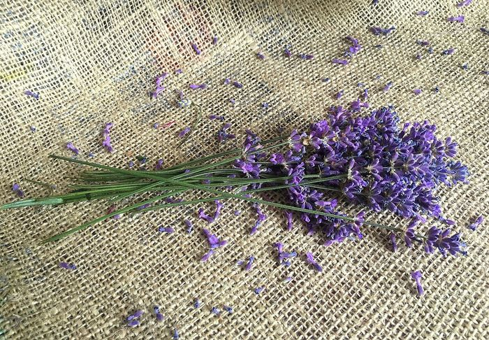 Aroma Therapy Relax Time Aromatherapy Aromatic Herbs Beauty In Nature Close-up Cosmetics Day Flower Flower Head Fragility Freshness Growth Lavender Lavender Flowers Nature No People Outdoors Plant Purple
