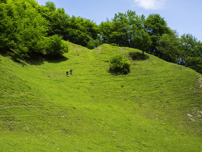 Two young men climb up the steep slope of a mountain covered with green grass Climb Up Grass Green Young Animal Themes Beauty In Nature Day Domestic Animals Grass Green Color Growth Landscape Mammal Men Mountain Nature No People Outdoors Scenics Sky Slope Steep Tranquility Tree Two