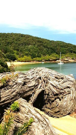 Beauty In Nature Cove Calm Sea Beach Nature Photography Dead Tree By The Beach Yacht